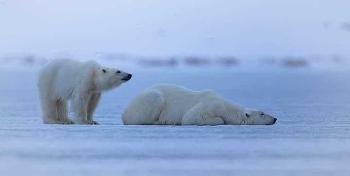 Spitsbergen-benedeti